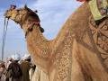 Bikaner Camel Festival3