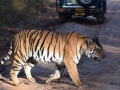 india_glance_ranthambore