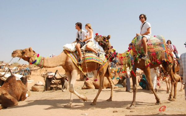 Jaipur Pushkar One Day Tour