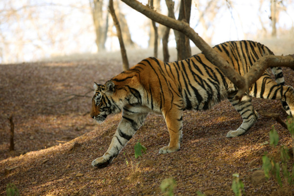 Rajasthan Wildlife Safari Tour Package